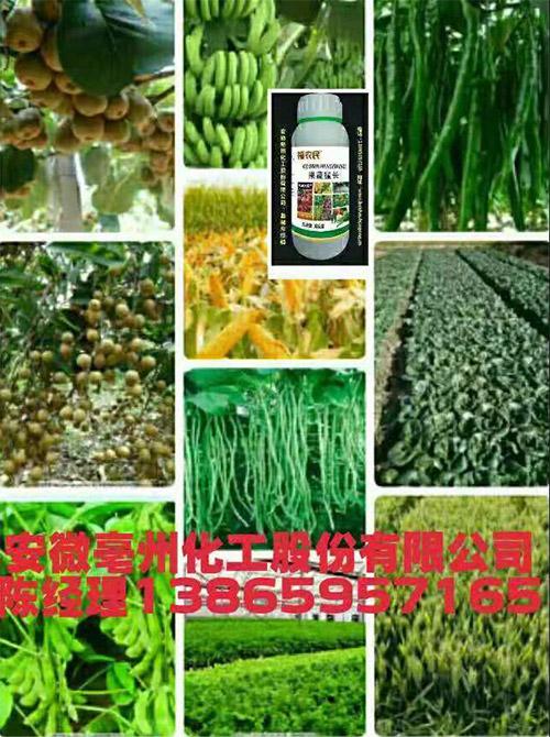 福农民果蔬猛长――新一代果蔬zeng产水溶肥